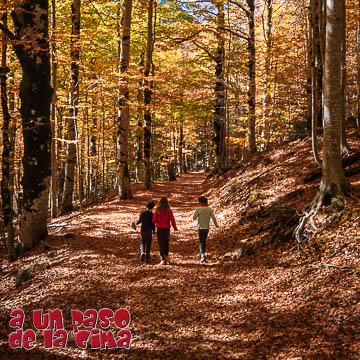 Hayedo de Ordesa: bosques y cascadas